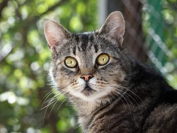 Очень колоритные уличные коты бродячий кот, город, кот, кошка, улица, уличная жизнь, эстетика