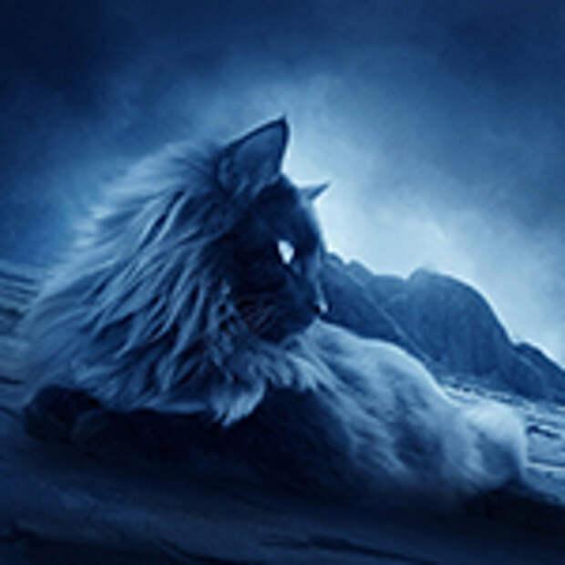 Мистическое поведение кошек