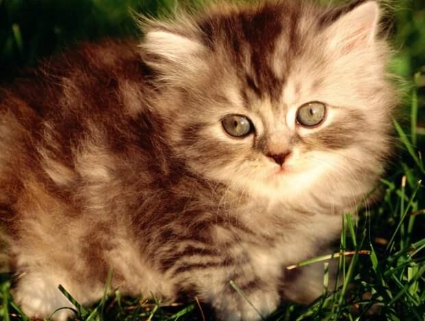 Почему стоит завести кота?)))
