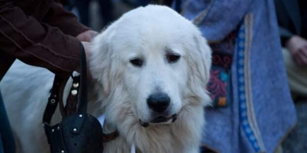 Собаконенавистники разбросали отраву на улице Панфилова