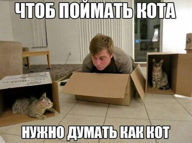 коробки :: преступники :: фото приколы (новые и лучшие приколы ...