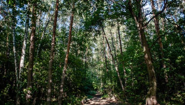 Около 1,1 тыс человек вывели из лесов Подмосковья с начала 2019 года