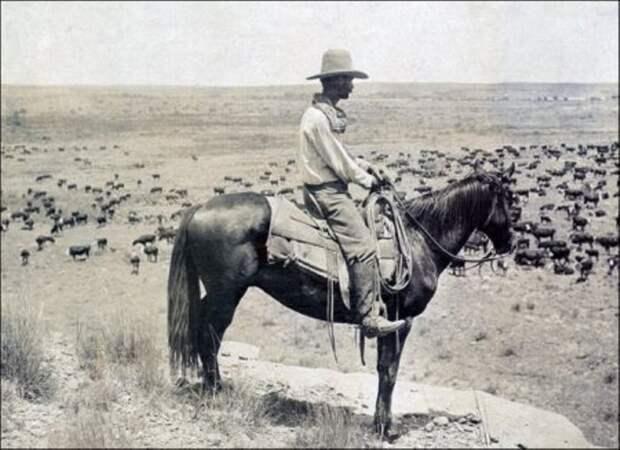 Конный пастух за работой