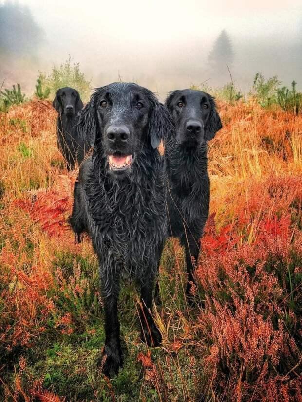 Победитель в категории «Портрет» великобритания, животные, интересное, конкурс, собака, собаки