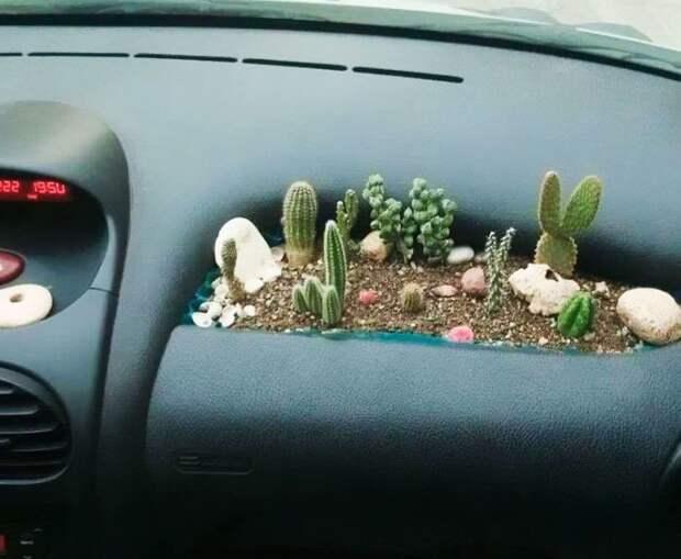 Худшее место для рассады кактусов, потому как в результате первой же резкой остановки они будут торчать из головы пассажира идея, подборка, прикол, своими руками, юмор