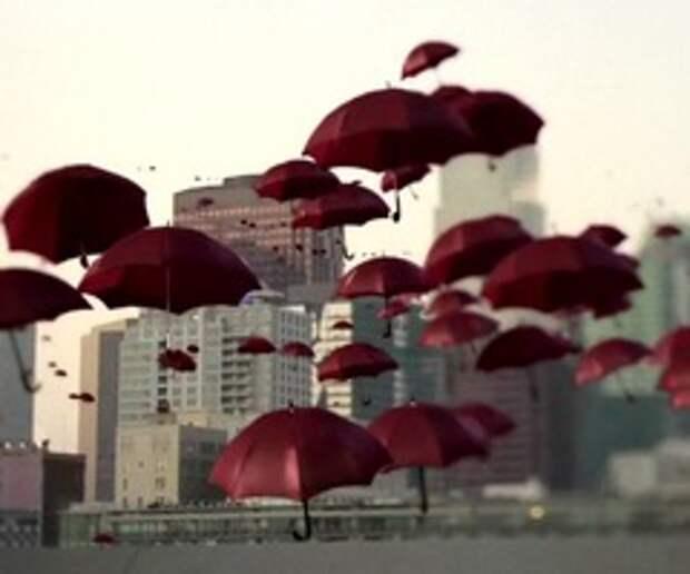 Зонтики-бродяги