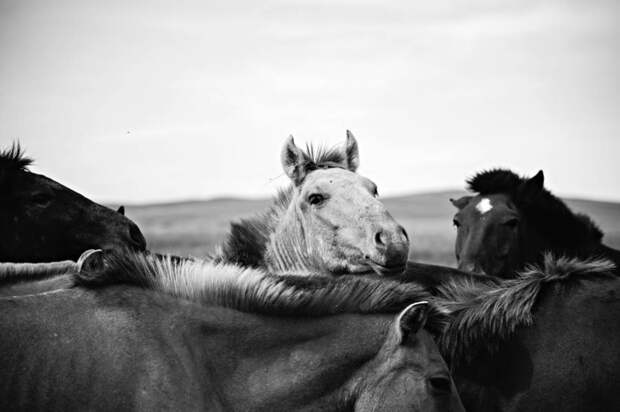 Блестящие черно-белые снимки от известного фотожурналиста