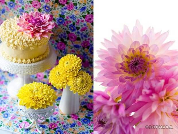 красивые цветы из маршмеллоу