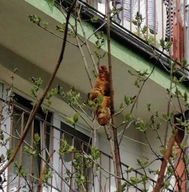Жительница Кракова вызвала службу защиты животных из-за странного зверя на дереве