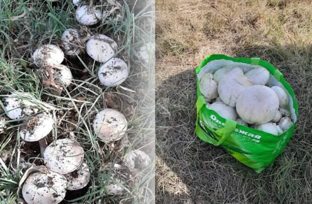 В Астраханской области начался грибной сезон