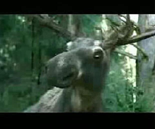 Агентство A.R.M.I. создало экологически-чистый ролик о лосях