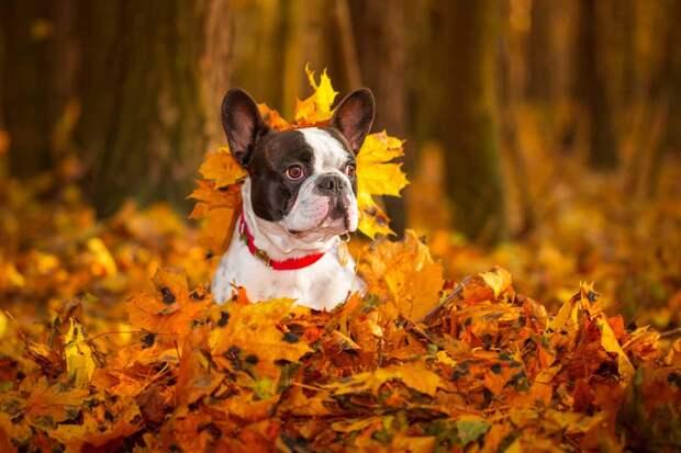 Собака-сентябряка: какую опасность таят в себе осенние листья