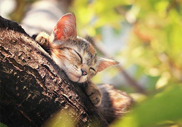 45. Сон в летний день котенок, сон