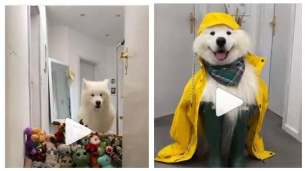 (ТОП-3 Видео) Собака Феликс завоевывает инстаграм: поднимите себе настроение!