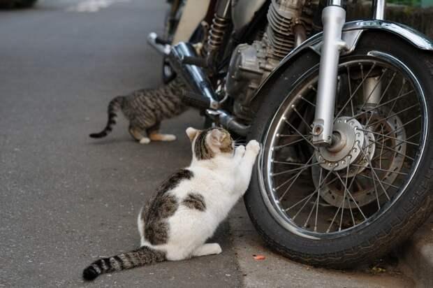 Милые, смешные и забавные котики