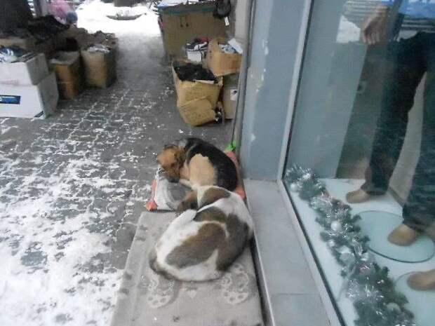 Желание помочь,желание обогреть и накормить. животне, животные