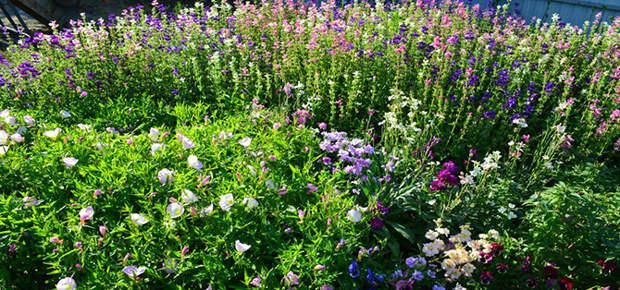Список самых полезных лекарственных растений для дачи