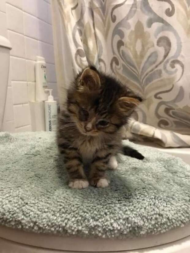 Котёнок ни на минуту не бросает своего брата, пережившего удаление глаза