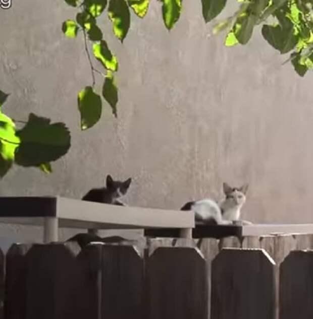 Котята лежат