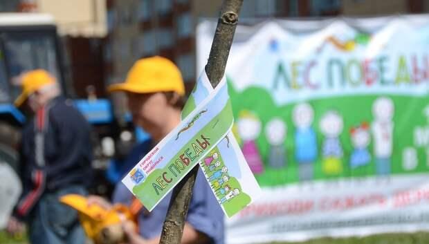 Более 19 тыс деревьев и кустарников высадят в Подольске в ходе акции «Лес Победы»