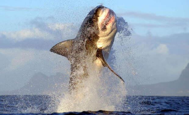 7. Я говорю людям, что делаю намного больше физическим упражнений, чем это есть на самом деле Белая акула, фото
