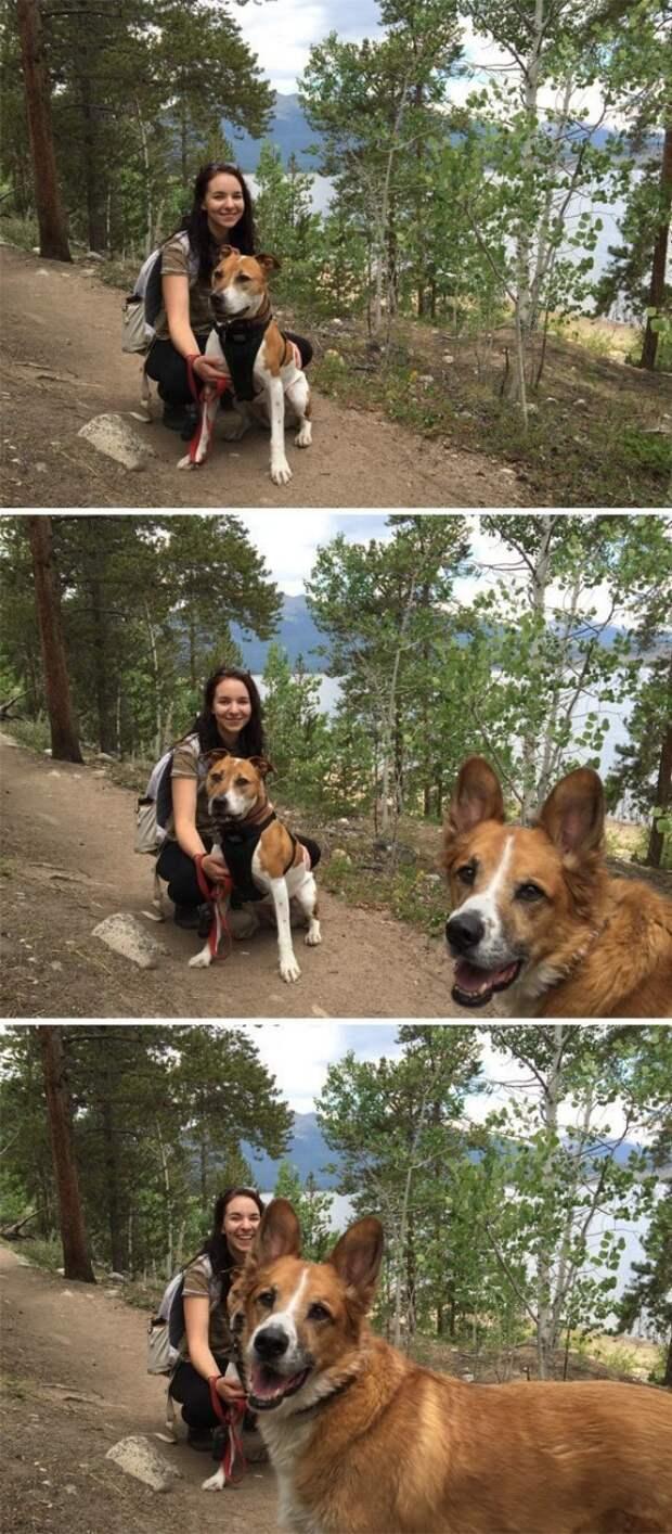 10. Две собаки лучше, чем одна собака! животные, кадр, прикол, собака, юмор