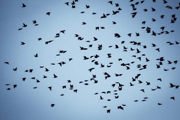 Роспотребнадзор заявил об опасности нового птичьего гриппа