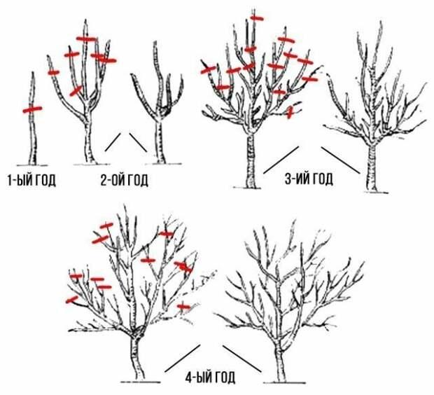 Как правильно обрезать яблоню весной Лайфхак, дача, огород, полезные советы, сад