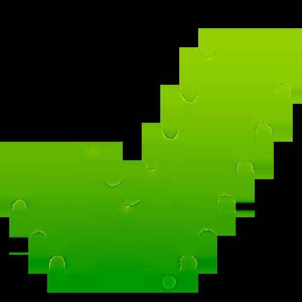 Эхинацея — чудо растение от всех болезней