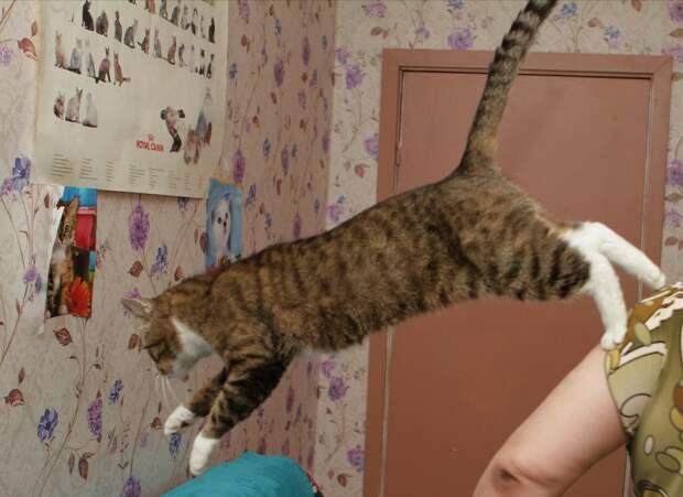 Уникальное предложение для любителей кошек с сильным характером!