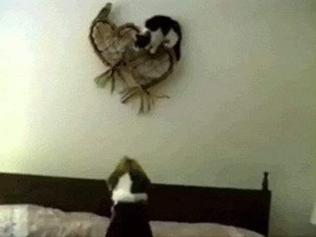 Гифки с кошками