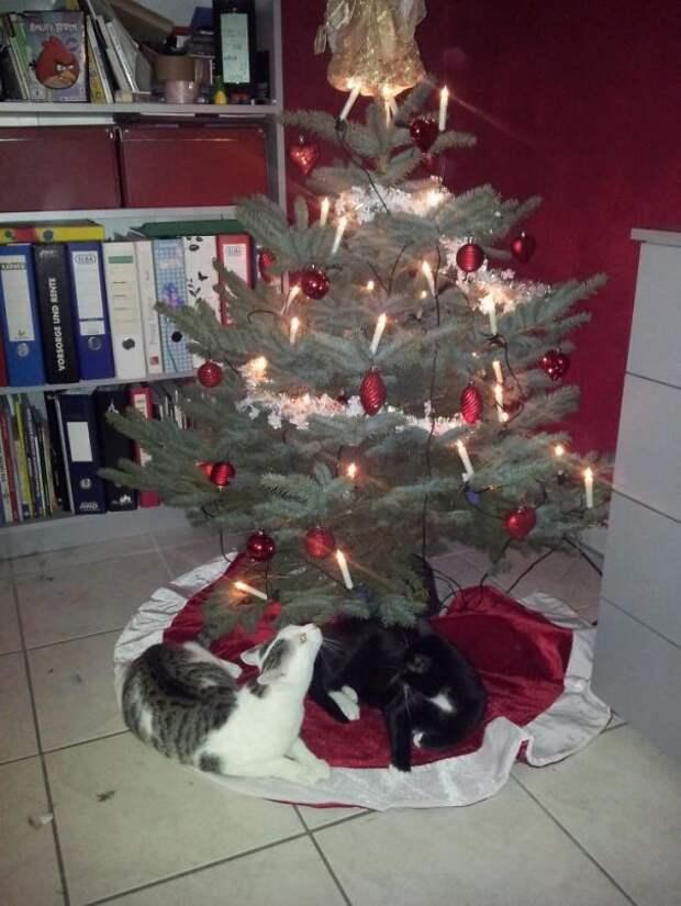 34. Лучше любых подарков под елкой  елка, кошка, подборка