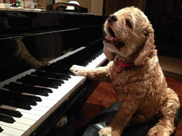 Смешные и забавные собаки