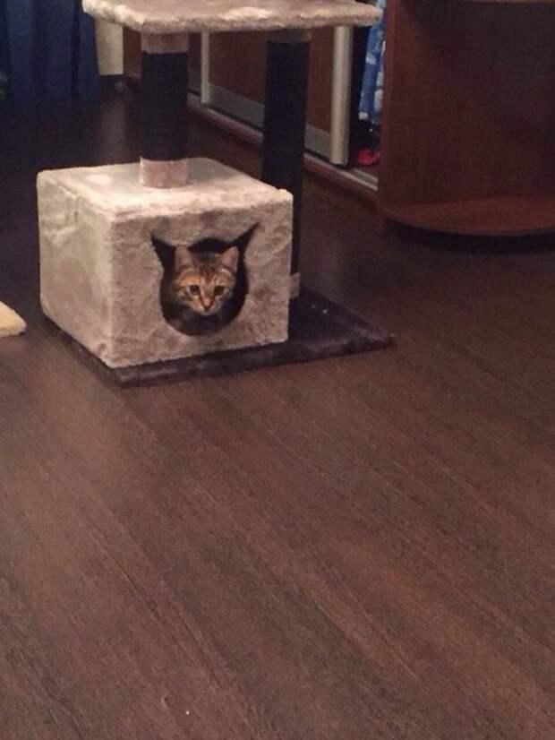 Забрали из подвала, где травили кошек