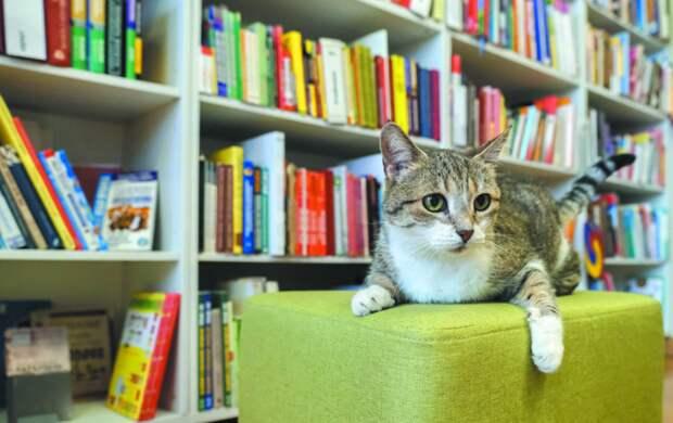 Муся любит готические романы: почему за кошкой приходится следить