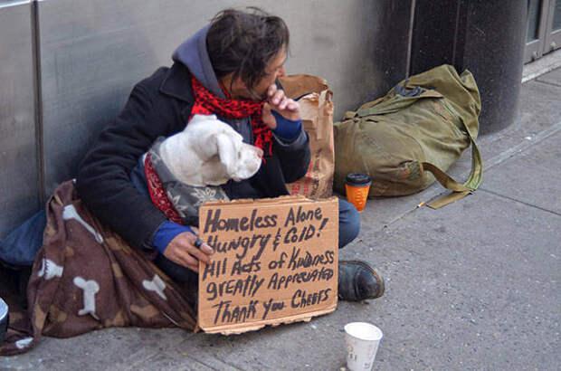 12 трогательных фотографий о преданности собак
