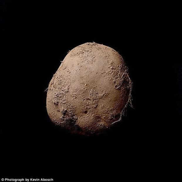 Фотография картофелины, которую продали за миллион евро