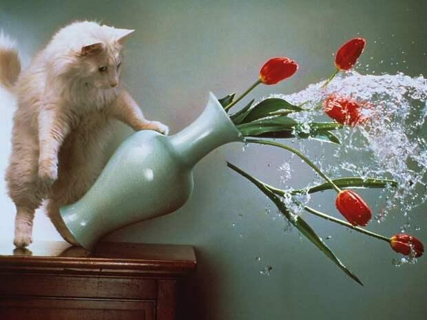 Вот почему кошки сбрасывают различные вещи со стола