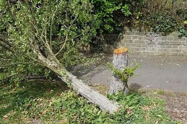 В Англии ищут «дровосека-призрака» — он по ночам вырубает десятками деревья
