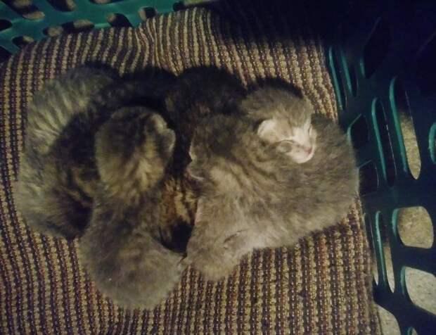 Ночью семья проснулась от кошачьего хора в комнате. Но… у них не было котов!