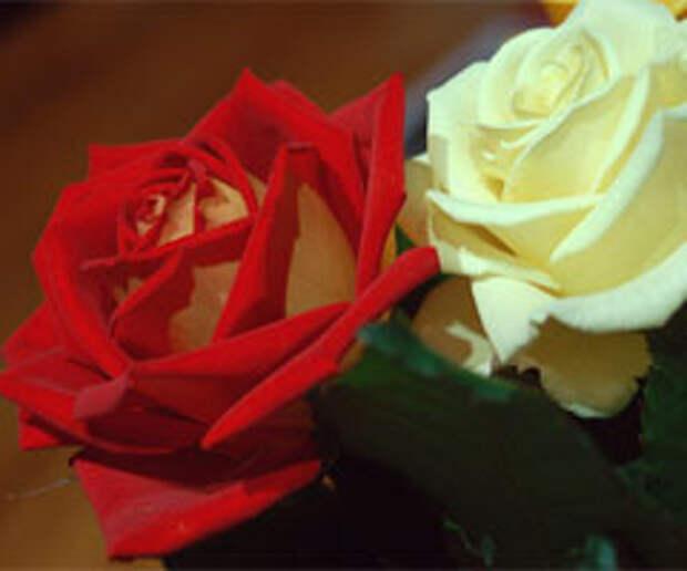 Миллион алых роз: идея социального проекта