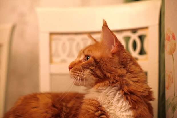 Иногда мне кажется, что моему коту за это платят. Ну, не может серьезная животина творить столько дури бескорыстно!