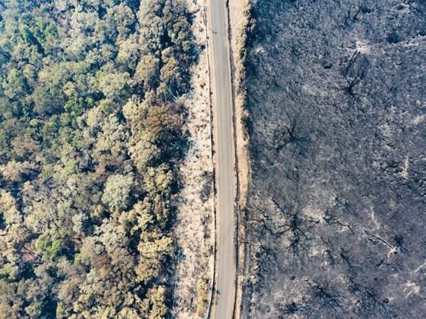 Долина Кенгуру в 160 км от Сиднея, январь 2020. Фото: Byron Ross / Greenpeace