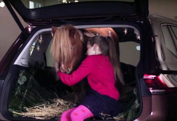 Рождественский пони спрятался в багажнике...Тигуана!