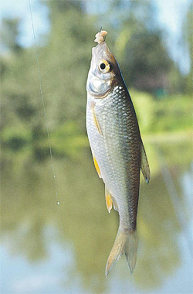 1302. Река Нара