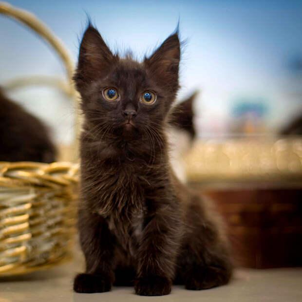 Помоги котенку Угольку забыть подвал!