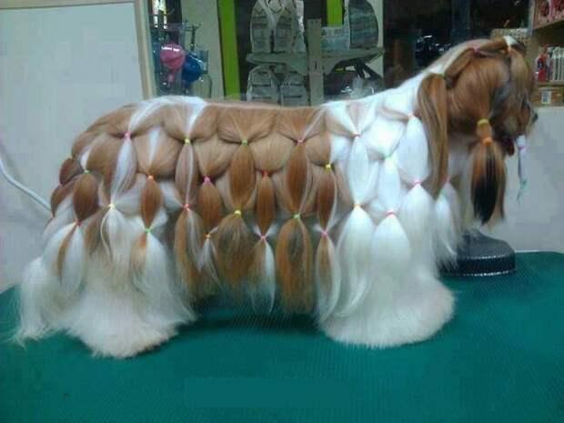 Причёска для длинношерстной собаки
