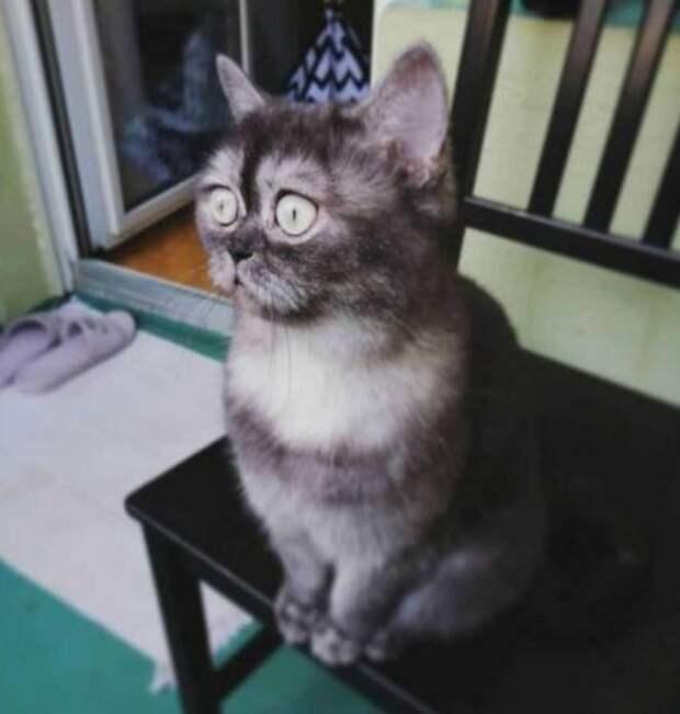 Кошечку никто не хотел брать из приюта из-за ее мордочки