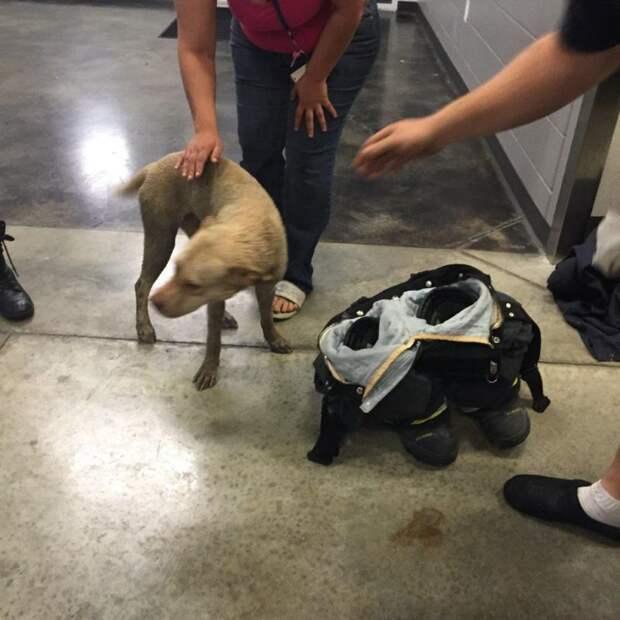 Как вызволяли пса, который застрял головой в колесе колесо, собака, спасение