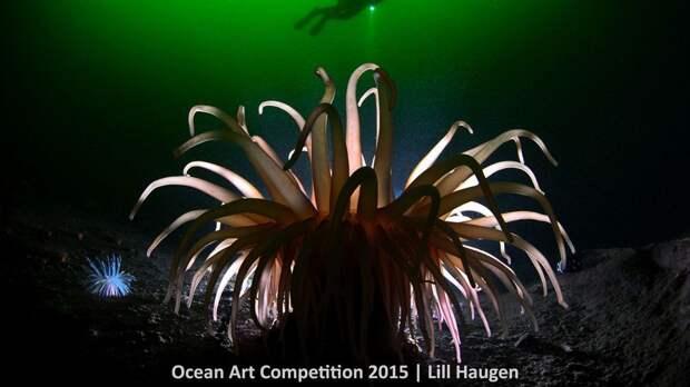 Лучшие подводные фотографии 2015 года